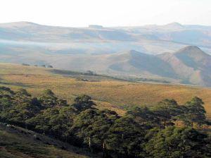 Mambila plateau